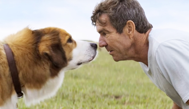 """DENNIS QUAID and """"Buddy/Bailey"""" in """"A Dog's Purpose in Life."""""""